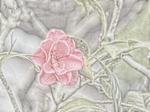 花弁.jpg