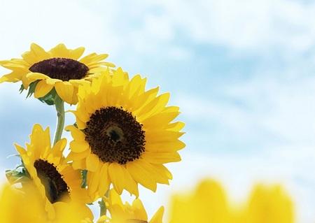 flower-back1452-1.jpg